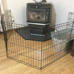 what to buy for new puppy safety fence gate