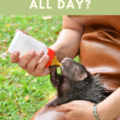 WHAT DOES A ZOOKEEPER DO ALL DAY?